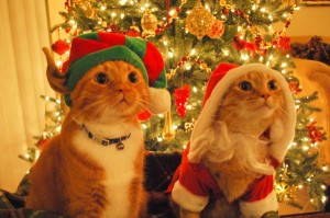 http://www.thatcutesite.com/uploads/2010/12/cats_dressed_as_santa_elf_02-600x399.jpg
