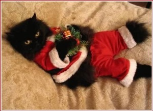 http://i337.photobucket.com/albums/n380/Dame-Bird/Santa_Cat.jpg