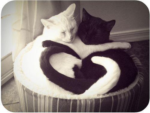 http://lovemeow.com/wp-content/uploads/2010/05/cats.jpg