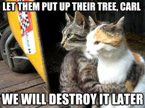 http://funnyasduck.net/wp-content/uploads/2012/12/funny-watching-cats-let-them-put-up-tree-destroy-later-christmas-xmas-pics-600x448.jpg